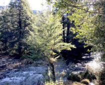 proyecto-parque-huichahue-entorno-rio
