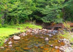entorno-parque-huichahue-1
