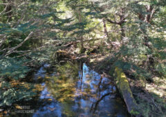 entorno-parque-huichahue-12
