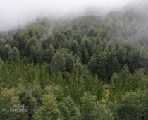 entorno-parque-huichahue-3